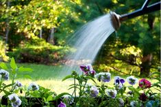 How to Water Garden Plants Sod Grass, Fruit Trees In Containers, Water Garden Plants, Lawn Care Business, Plant Needs, Landscaping Plants, Amazing Gardens, Gardening Tips, Nature