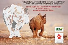 STOP THE SHOOTING OF RHINOS IN SOUTH AFRICA