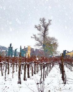Anche in #Franciacorta nevica confidiamo allora in una buona annata... Brindiamo italiano  con un buon Franciacorta  cin cin!!   #villafranciacorta #villaiseverywhere #luxuryvilla #winespectator #inlombardia #saporeinlombardia #visitlakeiseo #wineexperience #sparklinglife #italianwines #autumninlombardia #ilikeitaly #luxury #luxurylifestyle #madeinitaly #vineyards #cellar #winelover #winetasting #winetime #winery #instawine