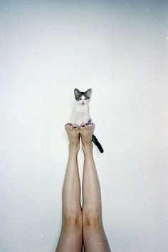 Here's a yoga tip: enhance the well-being derived from Legs-up-the-Wall by topping it with a little kitty! :)