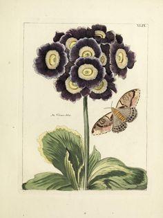 Nederlandsch bloemwerk / - Biodiversity Heritage Library