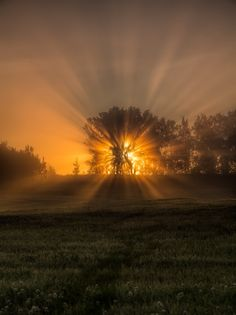 Tree of life by Anders Hanssen on 500px