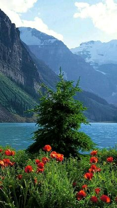 Wonderful Places, Beautiful Places, Save Nature, Nature Pictures, Pretty Pictures, Great Photos, Beautiful Landscapes, Beautiful World, Nature Photography
