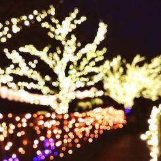 Instagram【chun.shan】さんの写真をピンしています。 《170107 江之島上的點燈小而美☄  #日本 #japan #神奈川 #江ノ島 #江之島 #湘南 #trip #enoshima #japantrip #夜景 #江島神社 #イルミネーション #light #newyear #happynewyear #2017 #nightview #写真好き #写真好きな人と繋がりたい #写真撮ってる人と繋がりたい #picture #photo #night #gf_japan #東京カメラ部 #ジュンサンのアルバム》