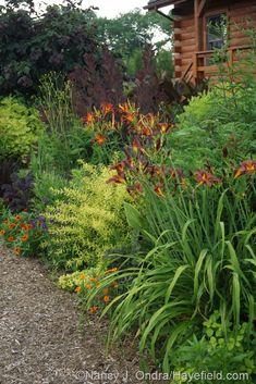'Milk Chocolate' and 'Nona's Garnet' daylilies (Hemerocallis), 'Mellow Yellow' spirea (Spiraea thunbergii 'Ogon'), 'Profusion Orange' zinnia, 'Royal Purple' smokebush (Cotinus coggygria), and 'Red Majestic' contorted hazel (Corylus avellana) Back Gardens, Outdoor Gardens, Outdoor Landscaping, Landscaping Ideas, Vegetable Garden Design, Garden Cottage, Garden Borders, Mellow Yellow, Dream Garden