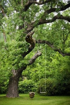 I had a tree swing like this in my back yard.every child needs a tree swing :) Dream Garden, Home And Garden, Big Garden, The Secret Garden, Parcs, Garden Inspiration, Travel Inspiration, The Great Outdoors, Outdoor Gardens