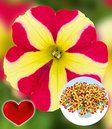 Petunia 'Amore® Queen of Hearts'
