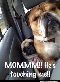 Funny Dog Car Ride