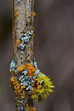 Jul 2014 - BC Lichen and Moss Photo by Wesley Lapointe -- National Geographic Your Shot Mushroom Fungi, Patterns In Nature, Natural Forms, Belleza Natural, Amazing Nature, Mother Nature, Planting Flowers, Nature Photography, Stuffed Mushrooms