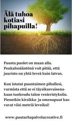 Kun pikkiriikkistä puuntainta on istuttamassa, on helppo aliarvioida kuinka suureksi se kasvaa. Tässä peukalosääntö jolla säästät taloasti vaurioilta.    www.puutarhapalvelucreative.fi