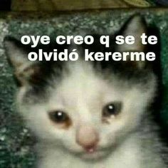 Read 23 from the story animales que curarn tu depresin. by hansen venus with 3252 reads. Memes Estúpidos, Cute Memes, Stupid Funny Memes, Memes Lindos, Response Memes, Funny Spanish Memes, Pinterest Memes, Wholesome Memes, Funny Stickers
