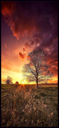 on the horizon #by Captain Nikon #sunset sky clouds amazing landscape tree meadow flowers nature yellow pink