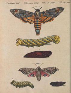 Bilderbuch für Kinder, Friedrich Bertuch, Vol IV, 1802.