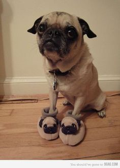 Imagen de dog, cute, and pug
