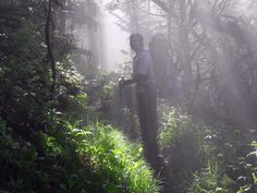 Early morning on the AT in the Smoky Mtns. Nat. Park.