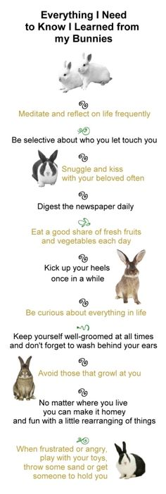 Everything I need to know I learned from my bunny.