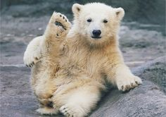 Polar bear says hi!    from Olga Gladysheva (http://500px.com/photo/7486733)