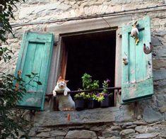 Muy gracioso el gato,en la ventana