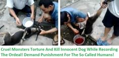 A group of cruel Vietnamese men recorded themselves in the process of inhumanely destroying an innocent dog.The animal has his legs tied and his mouth muzzled w...