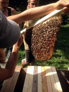 Confessions of a Beginning Beekeeper. Some good info about Top Bar hives.