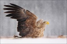 On the wing of the wind… by palankaizs
