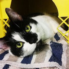 Who could resist this face? Overlooked since March 2015 because she is shy, Puddles (animal id #362700) is also sweet and friendly. She would love to come home with you and quietly watch the world go by looking out the window, or snuggling in a comfy bed. Learn more about her by clicking her picture.