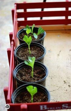 Vertical Rose Gardening Start Hydrangeas from Cuttings - Looking for a way to grow your garden without a lot of money? Learn how to start hydrangeas from cuttings, Propagating your plants will save you money. Growing Roses, Growing Plants, Growing Hydrangea, Gardening Zones, Gardening Tips, Container Gardening, Companion Gardening, Pallet Gardening, Gardening Supplies