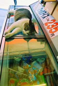 Getting cooled off on an Icecream Box | 猫島 警部 | Flickr