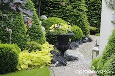 Ogród nie tylko bukszpanowy - część II - strona 1496 - Forum ogrodnicze - Ogrodowisko