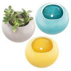 "Perfect for displaying lush succulents or an arrangement of vibrant blossoms, this charming ceramic bowl showcases a glossy glaze finish.   Product: BowlConstruction Material: CeramicColor: MultiFeatures: Glossy glaze finishDimensions: 3.15 "" H x 6.929"" W x 7.362"" DNote: Customer will receive two of each color depicted. Plant not included."