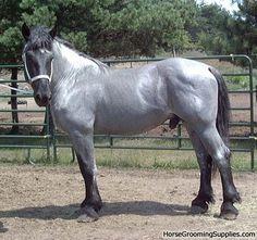 Blue roan draft horse