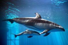Shedd Aquarium: Chicago, IL