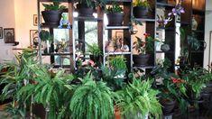 DEED Estantes para Flores Estilo Europeo Colgantes de Pared de Hierro Colgantes de la Moda Orqu/ídeas Colgantes Balc/ón Interior y Exterior Estante Decorativo Planta Ahorro de Espacio Macetero