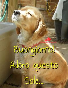 belle-immagini-buongiorno-frasi-buona-giornata-whatsapp Good Morning Dog, Good Morning Image Quotes, Free Good Morning Images, Good Morning Sunshine, Morning Pictures, Morning Sayings, Morning Pics, Free Pictures, Dog Pictures