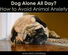 How to Avoid Animal Anxiety