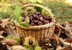 Chestnut harvest in wicker basket Chestnut Recipes, Sweet Chestnut, Chestnut Hill, Autumn Cozy, Fall Home Decor, Tis The Season, Raw Food Recipes, Belle Photo, Four Seasons