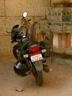 Monkey trouble, India,  Photo by Désirée Marie Townley
