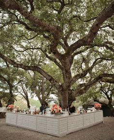 Inspiration of the Day: A Tree Bar   The Knot Blog – Wedding Dresses, Shoes, & Hairstyle News & Ideas