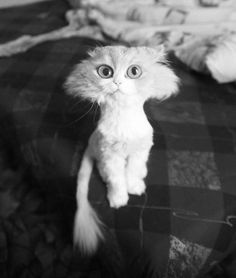 Shorthaired Cat - 21 Funny Pics of the Random Strange & Weird -