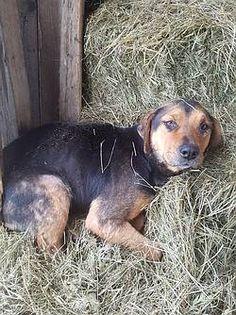 Tiere In Not Seite Hunde Aus Rumanien Hunde Aus Rumanien Tierschutz Hunde Tiere In Not