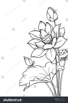 Flower Line Drawings, Flower Sketches, Drawing Sketches, Pencil Drawings, Lotus Drawing, Floral Drawing, Flower Outline, Lotus Flower Art, Art Drawings For Kids