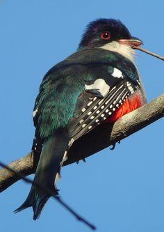 Pretty bird!