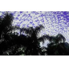 Uma semana cheia de boas vibrações. Looking Up Breath  #paisagem #sky #ceuazul #monday #segundafeira #arvores #clouds #nuvens #intothewild #landscape #styleoftheday #sustentabilidade #upcycle #nature #inspiration #modasustentavel #slowfashion #ecofashion #фото #consumoconsciente #nachhaltigkeit #breath #ethicalfashion #grüne #estilo #riodejaneiro #fashiondesign #brasil #photography #lifestyle by odyssee_br http://ift.tt/1OYI1RW