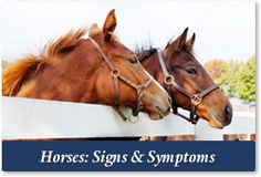 Horse Chiropractic: Signs & Symptoms