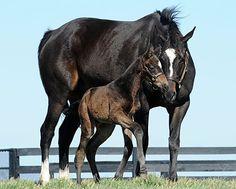Zenyatta and her colt