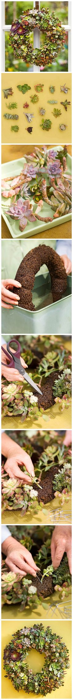 Succulents Wreath DIY