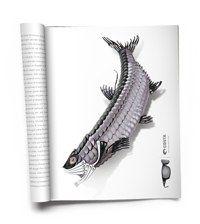 "Costa ""Fish Art"" Print"