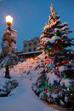 snowy christmas tree in truckee this snow covered christmas tree was photographed in
