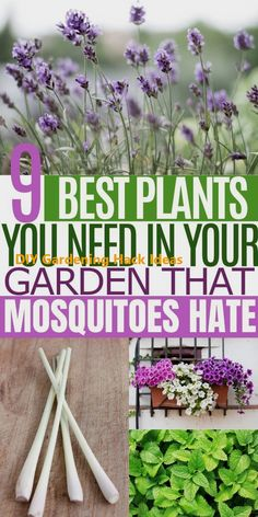 9 Plants That Repel Mosquitoes and Flies Pest Repelling Plants Add these beautiful mosquito and fly fighting plants in your garden for a relaxing outdoor space Some of t. Garden Yard Ideas, Lawn And Garden, Garden Projects, Garden Landscaping, Cute Garden Ideas, Porch Garden, Garden Beds, Diy Projects, Outdoor Plants