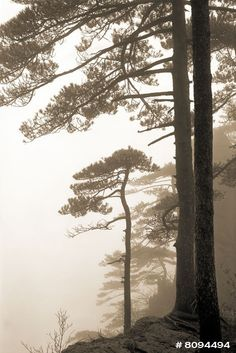 Forest in the mist Black and White by KingWuPhotography on Etsy, $28.00